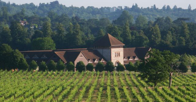 Keeping it local - The Vineyard summer tasting at Denbies